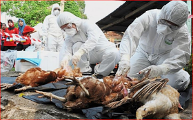 Bird Flu returns to 7 states in Nigeria- Federal Government warns